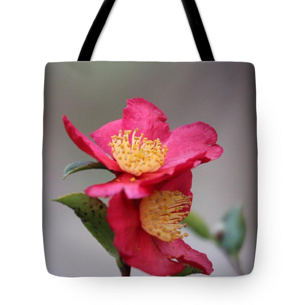 Camellia Sasanqua Yuletide Tote Bag featuring the photograph Camellia Sasanqua Yuletide 1 by Marta Robin Gaughen