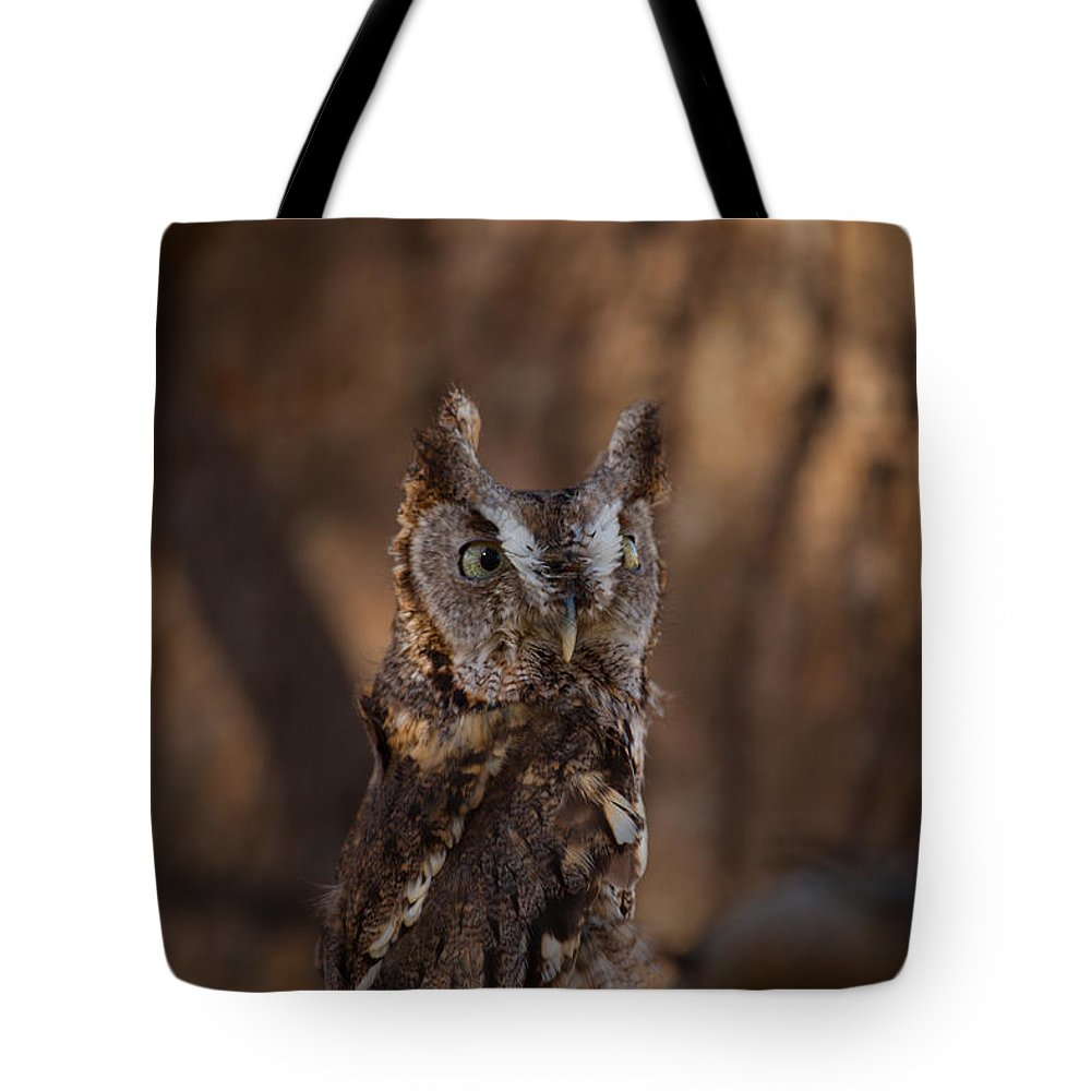 Eastern Screech-owl Tote Bag featuring the photograph Camouflage by Robert Shields