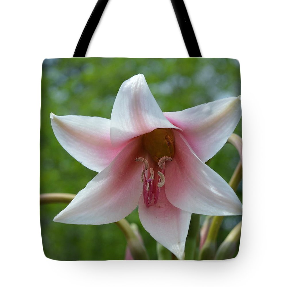 Jumbo Crinum Tote Bag featuring the photograph Can You See Me by Linda Covino