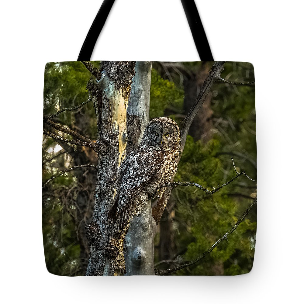 Great Grey Owl Tote Bag featuring the photograph Can You See Me? by Yeates Photography