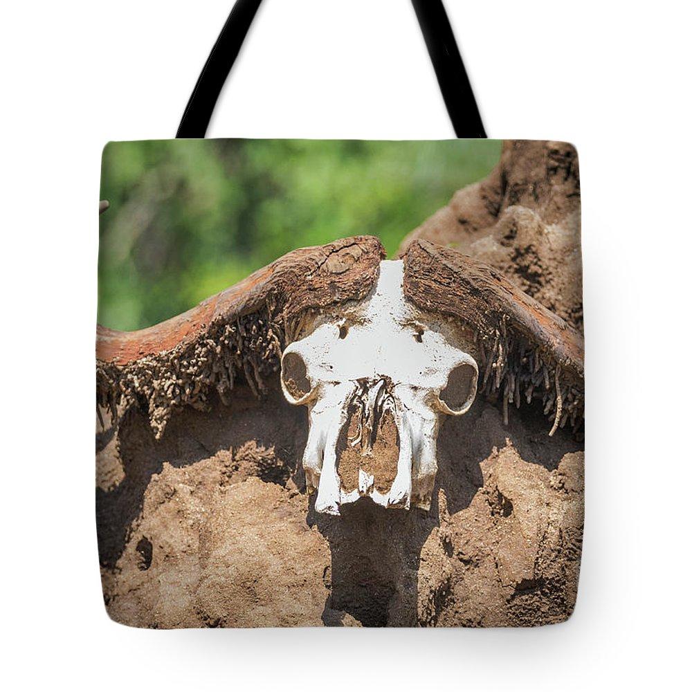 Cape Buffalo Tote Bag featuring the photograph Cape Buffalo Skull by Rob Daugherty