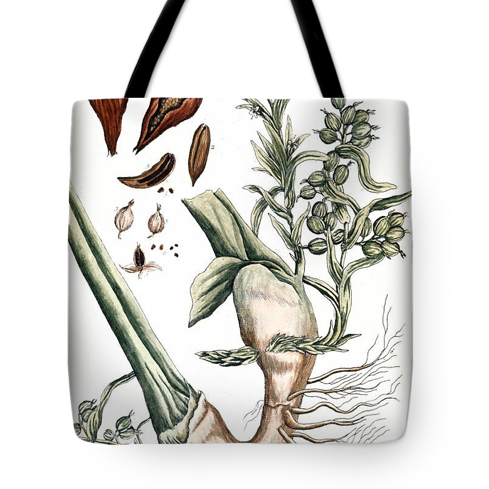 1730s Tote Bag featuring the photograph Cardamom, 1735 by Granger