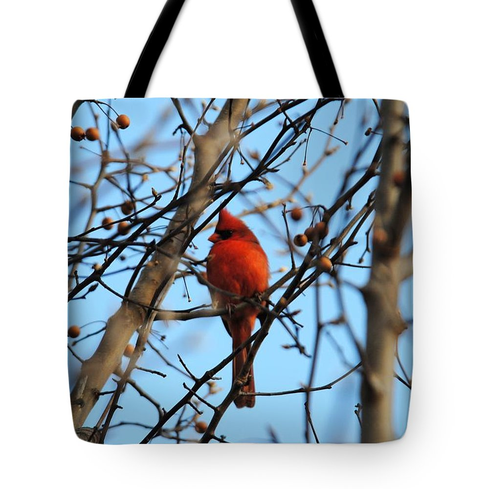 Cardinal Tote Bag featuring the photograph Cardinal II by Jai Johnson