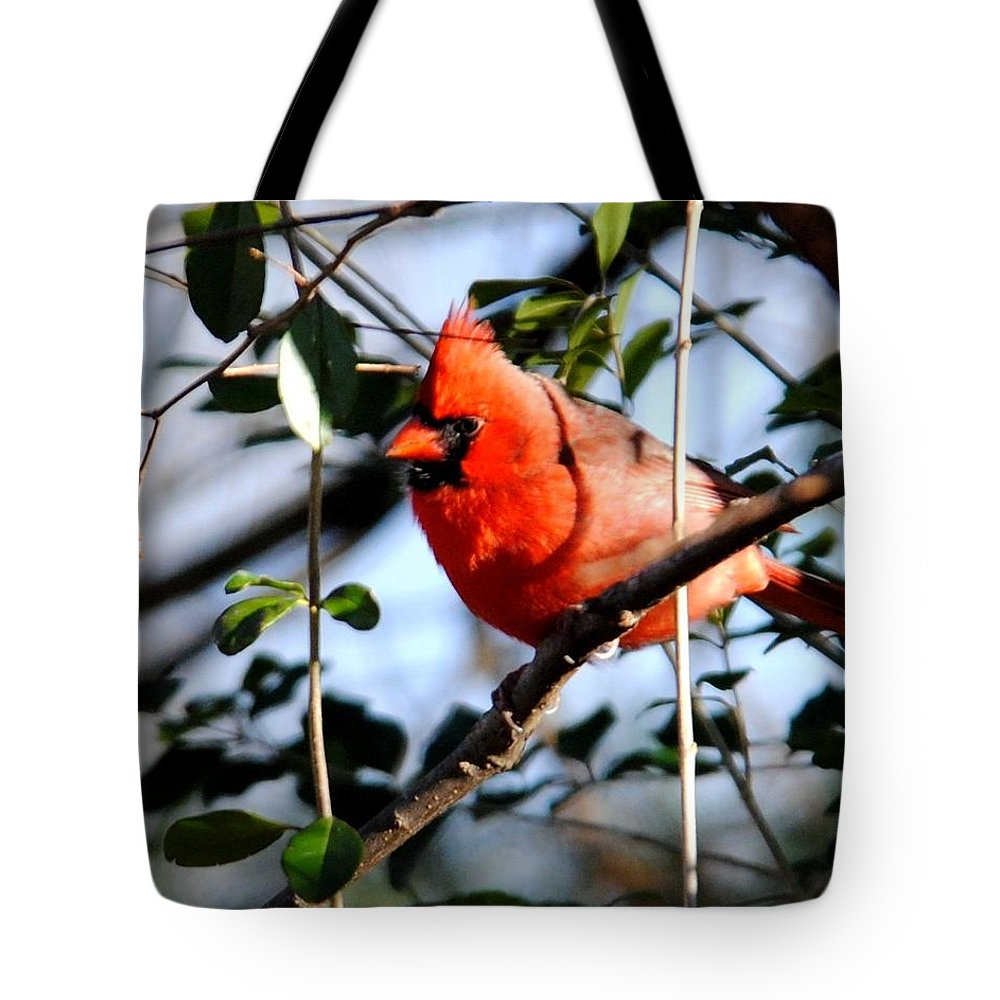 Cardinal Tote Bag featuring the photograph Cardinal IIi by Jai Johnson