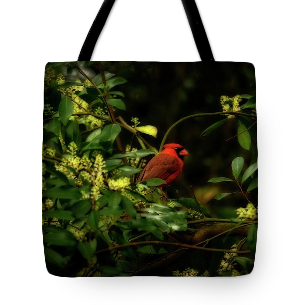 Cardinal Tote Bag featuring the photograph Cardinal In The Trees by Joseph Rainey