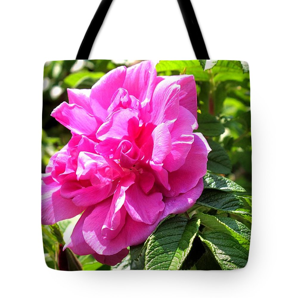 Rose Tote Bag featuring the photograph Carmen by Ian MacDonald