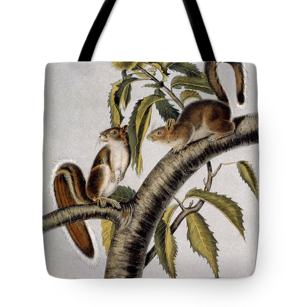 1846 Tote Bag featuring the photograph Carolina Grey Squirrel by Granger
