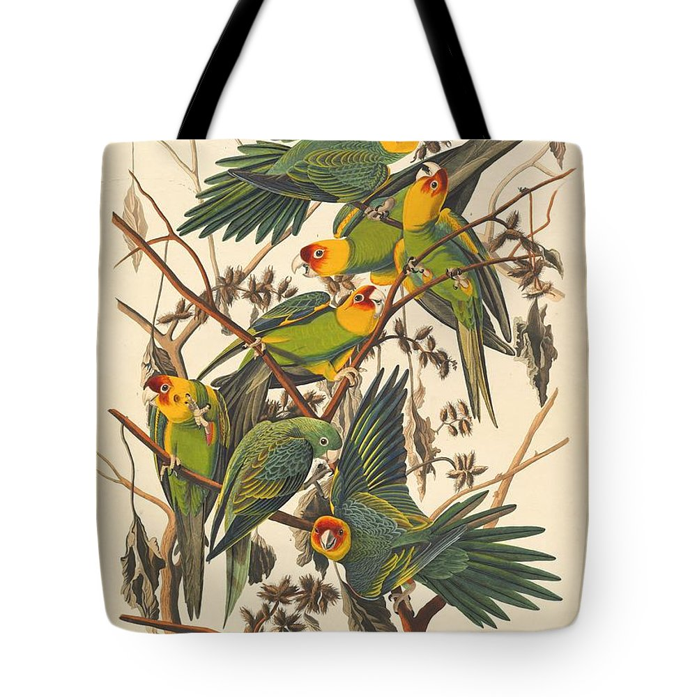 Audubon Tote Bag featuring the drawing Carolina Parrot by Dreyer Wildlife Print Collections