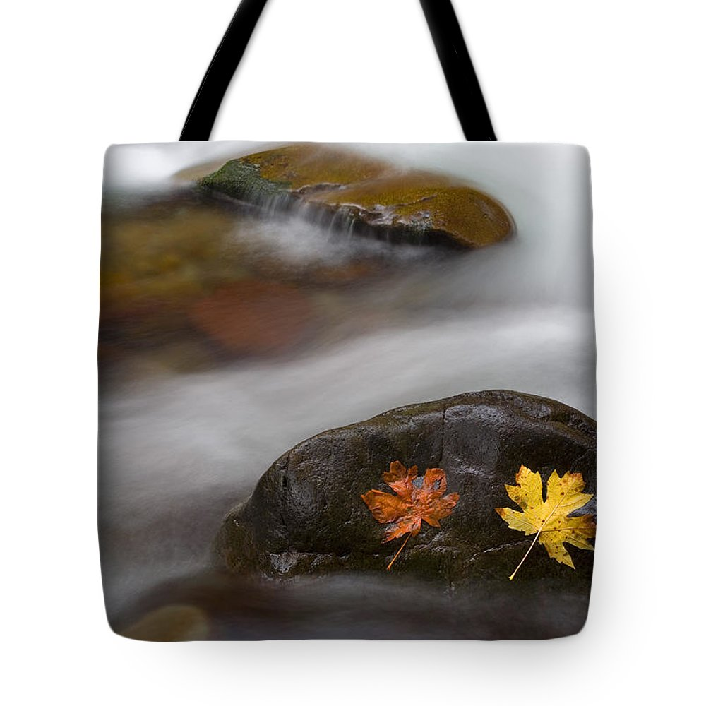 Leaves Tote Bag featuring the photograph Castaways by Mike Dawson