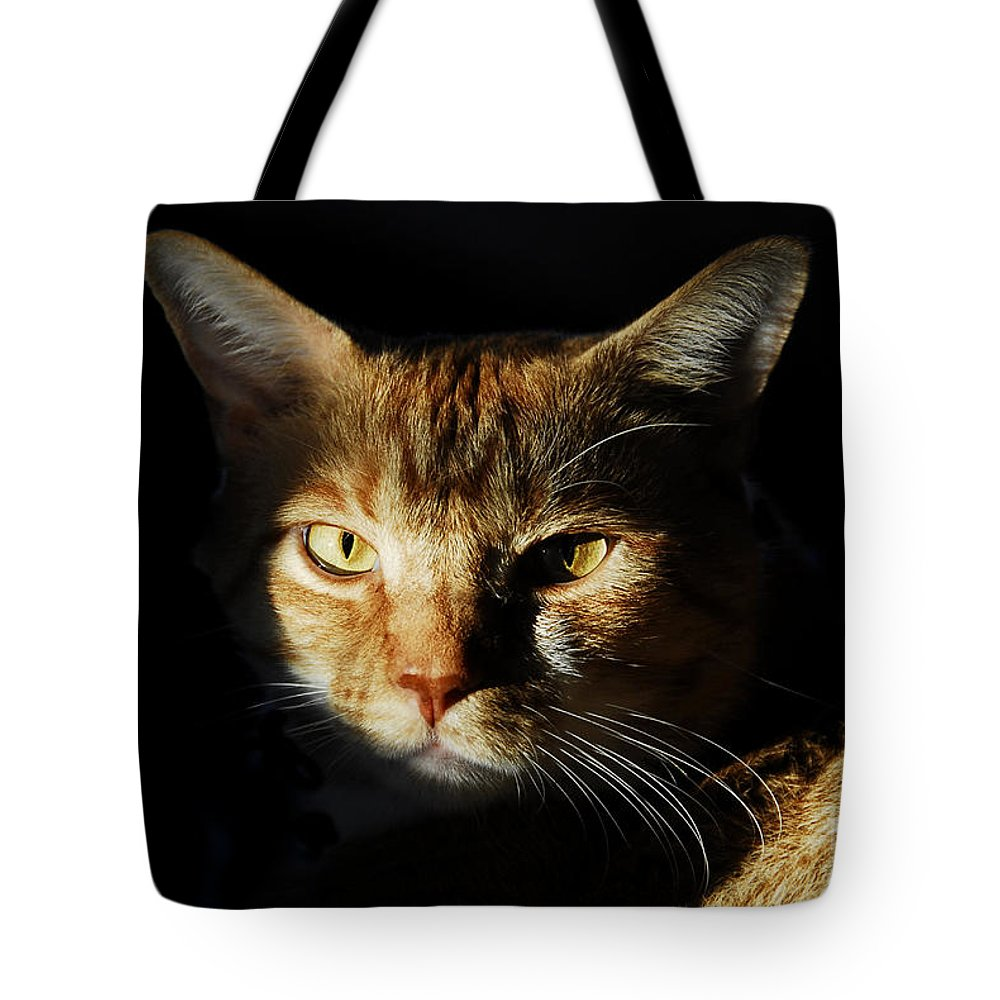 Cat Tote Bag featuring the photograph Cat In Shadow by David Lee Thompson