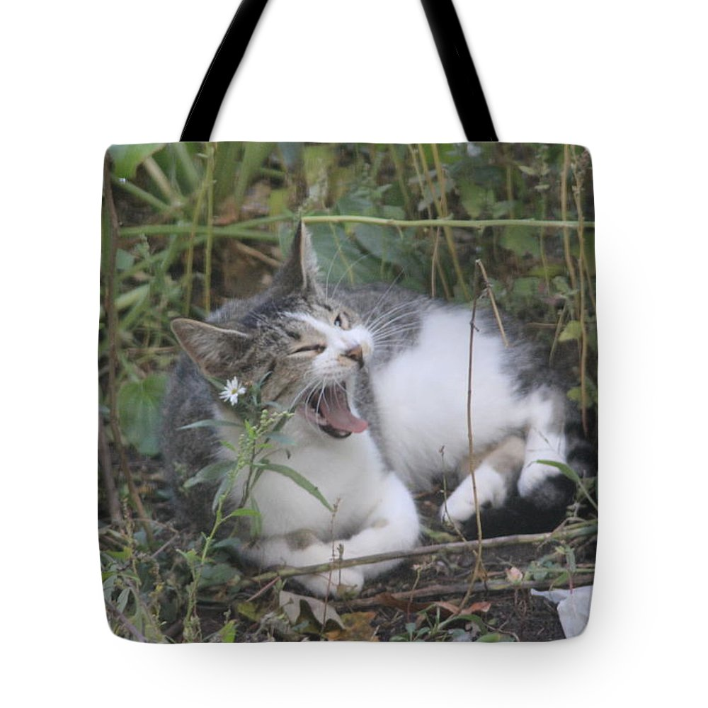 Cat Tote Bag featuring the photograph Cat Yawning In The Garden by Cliff Ball