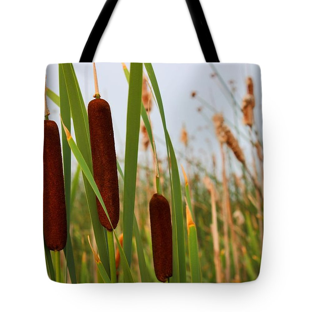 Cattails Tote Bag featuring the photograph Cattails Delight by Josee Lavallee