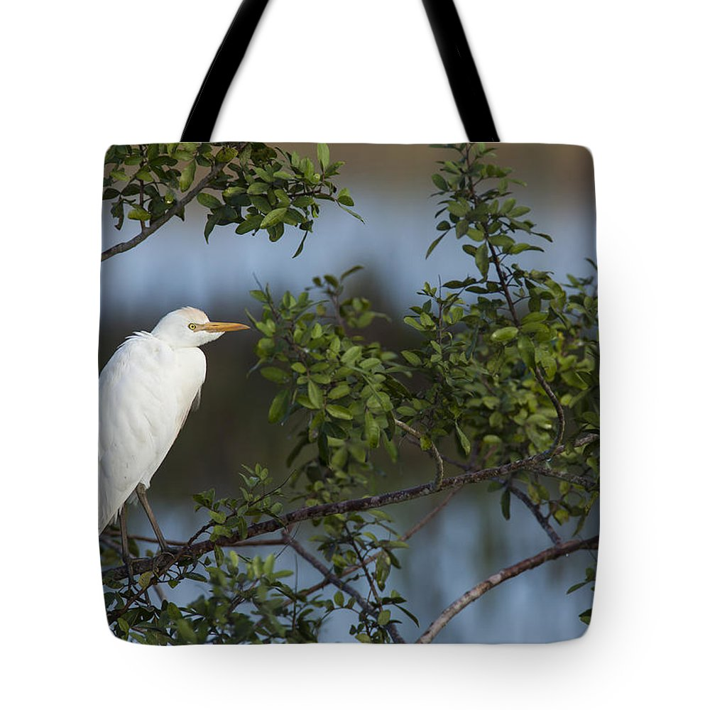 Cattle Tote Bag featuring the photograph Cattle Egret In The Morning Light by David Watkins