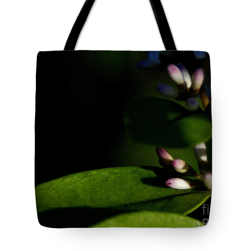 Plant Tote Bag featuring the photograph Caught Between Shadow And Light by Linda Shafer