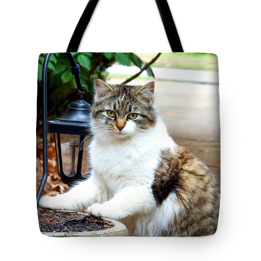 Cat Tote Bag featuring the photograph Caught by Jai Johnson