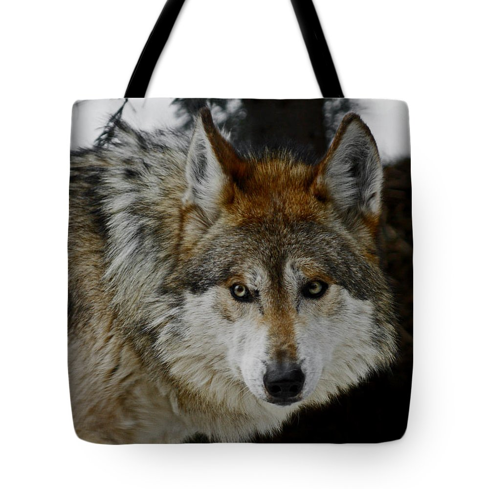 Wolf Tote Bag featuring the photograph Caution by Ernie Echols