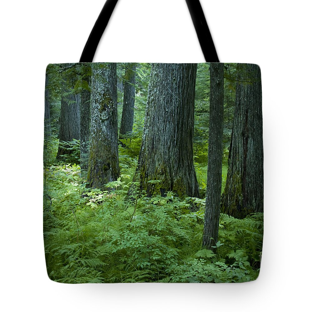 Grove Tote Bag featuring the photograph Cedar Grove by Idaho Scenic Images Linda Lantzy