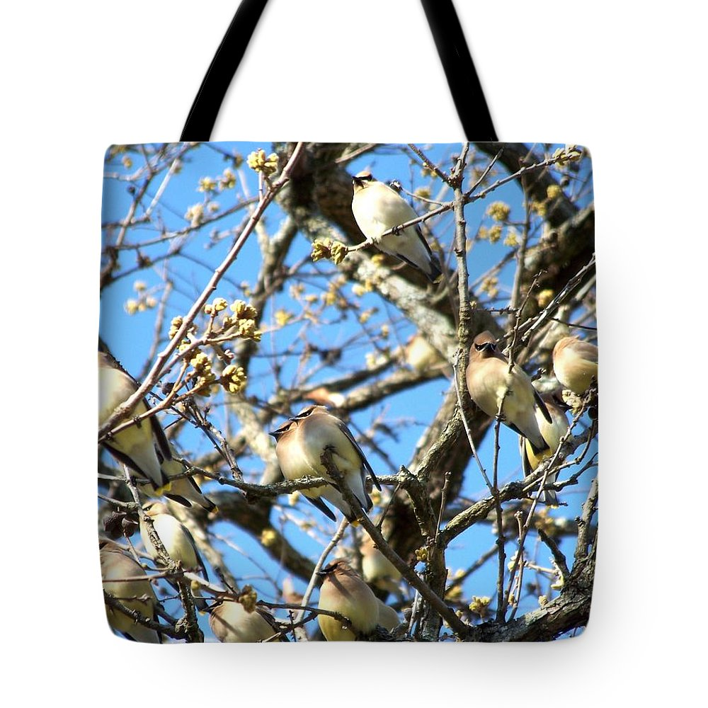 Cedar Waxwing Tote Bag featuring the photograph Cedar Waxwing Family by Jai Johnson