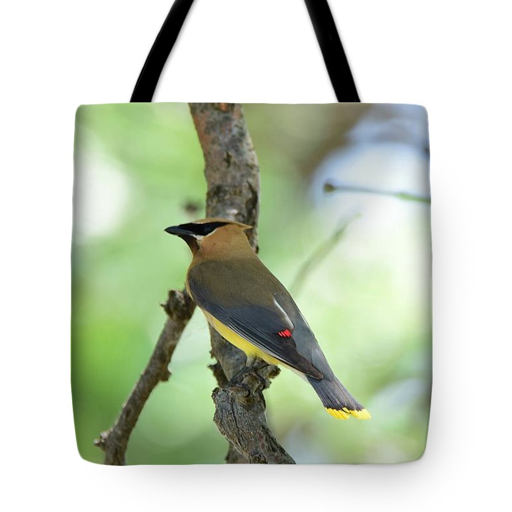 Bird Tote Bag featuring the photograph Cedar Waxwing by Floyd Kauffman