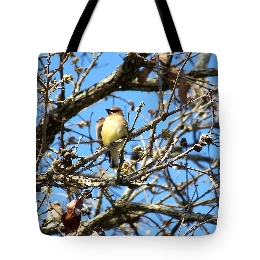 Cedar Waxwing Tote Bag featuring the photograph Cedar Waxwing I by Jai Johnson