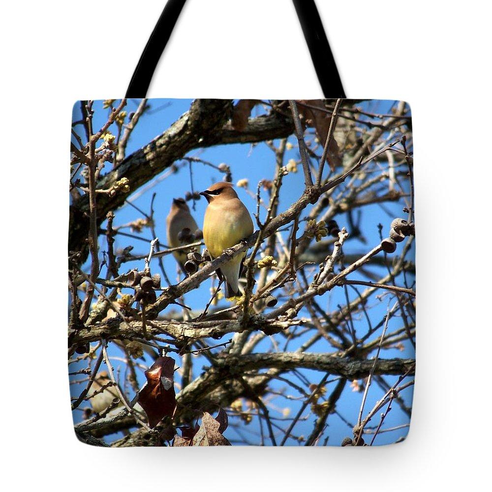 Cedar Waxwing Tote Bag featuring the photograph Cedar Waxwing II by Jai Johnson