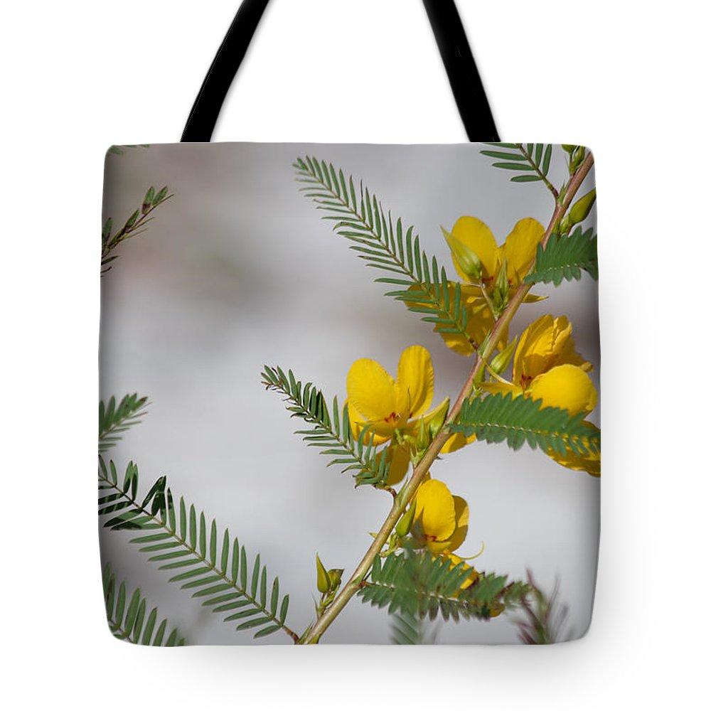 Chamaecrista Fasciculata Tote Bag featuring the photograph Chamaecrista Fasciculata Sleeping Plant Partridge Pea by JR Cox