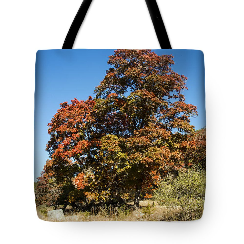 Lost Maples State Natural Area Texas Park Parks Maple Leaves Leaf Fall Autumn Tote Bag featuring the photograph Changing Maple Colors by Bob Phillips