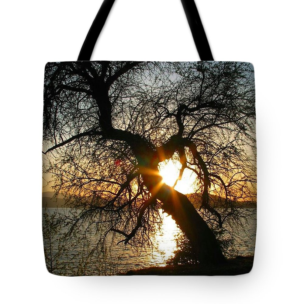Tree Tote Bag featuring the photograph Character by Idaho Scenic Images Linda Lantzy