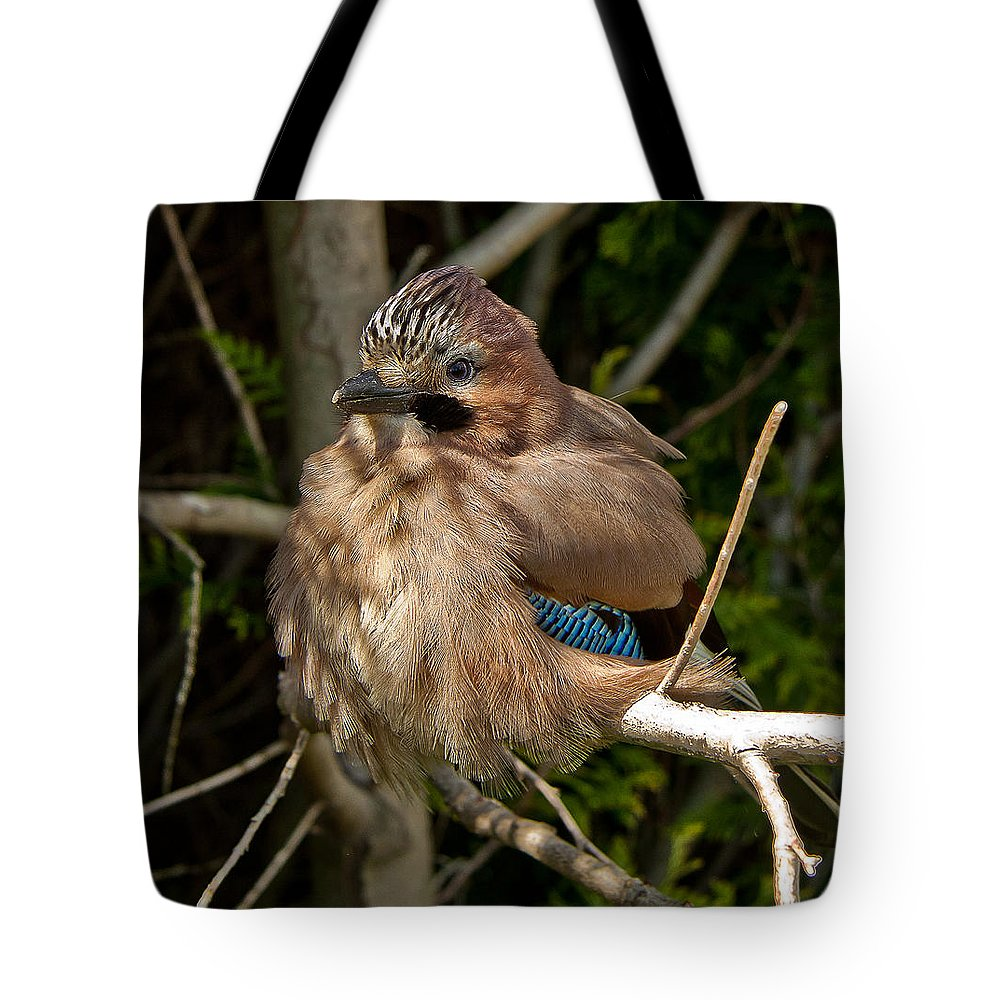 Nature Tote Bag featuring the photograph Cheeky Jay by Dawn OConnor