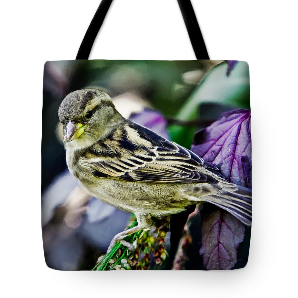 Bird Tote Bag featuring the photograph Cheeky Sparrow by Chris Lord
