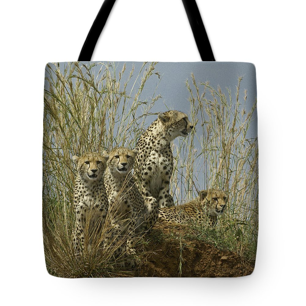 Africa Tote Bag featuring the photograph Cheetah Family by Michele Burgess