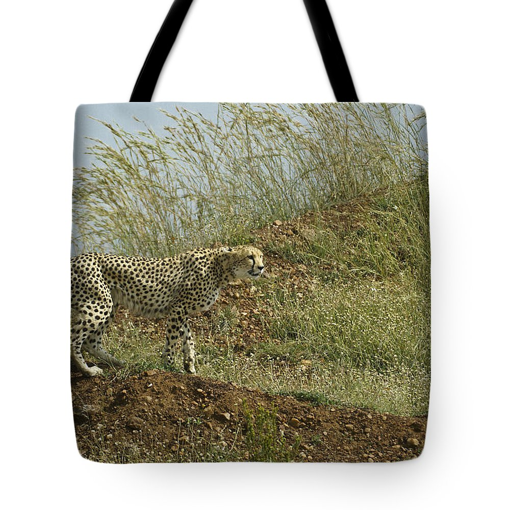 Africa Tote Bag featuring the photograph Cheetah On The Prowl by Michele Burgess