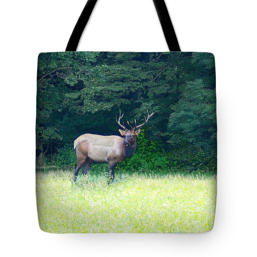 Cherokee Elk Tote Bag featuring the photograph Cherokee Elk by Seth Weaver
