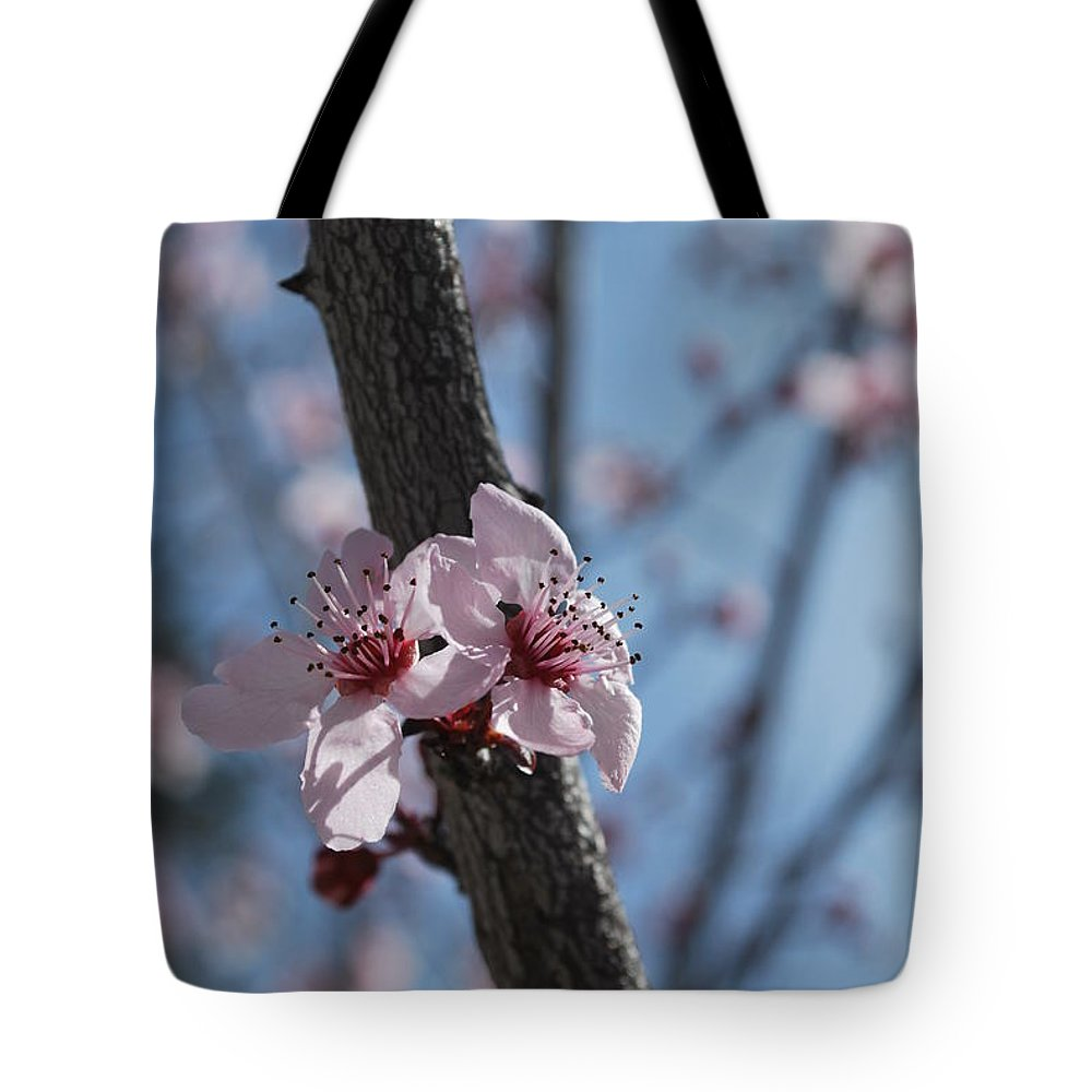 Tote Bag featuring the photograph Cherry Blossom Branch by Heather Kirk