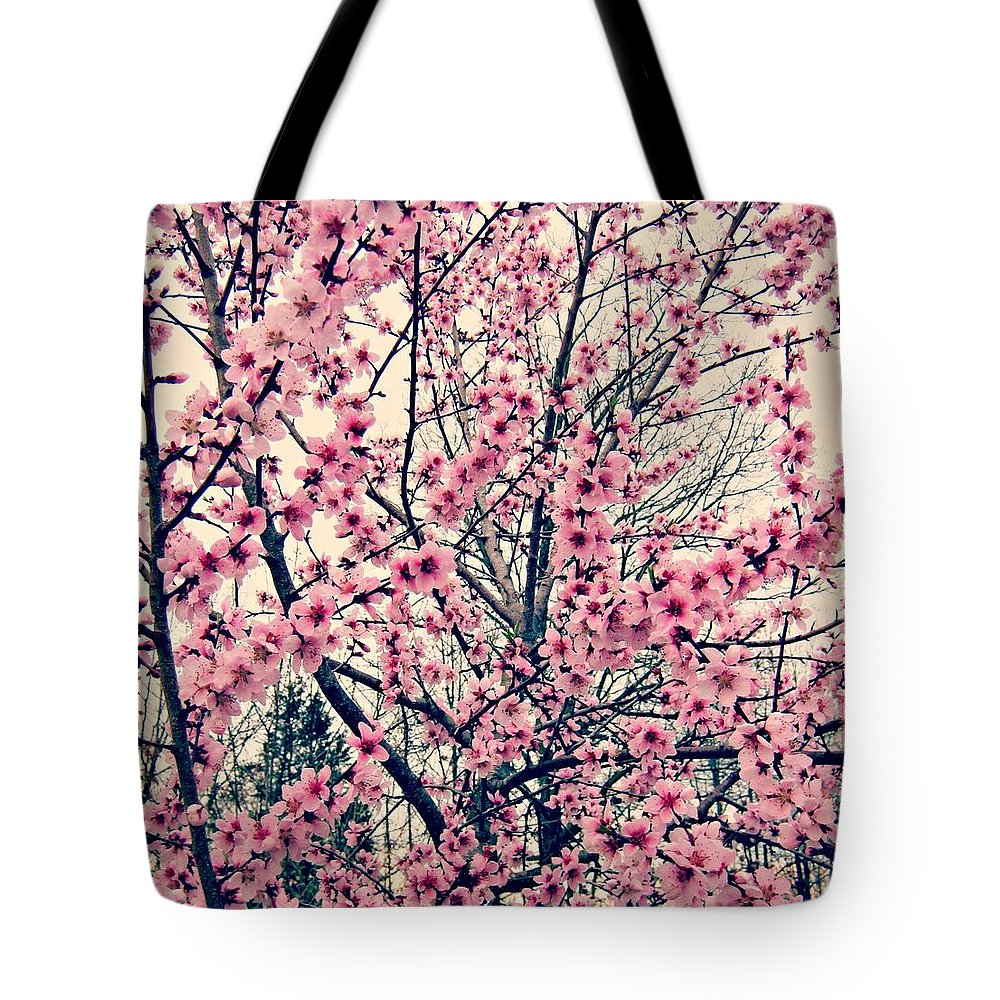 Cherry Blossoms Tote Bag featuring the photograph Cherry Blossoms by Fern Cardinal
