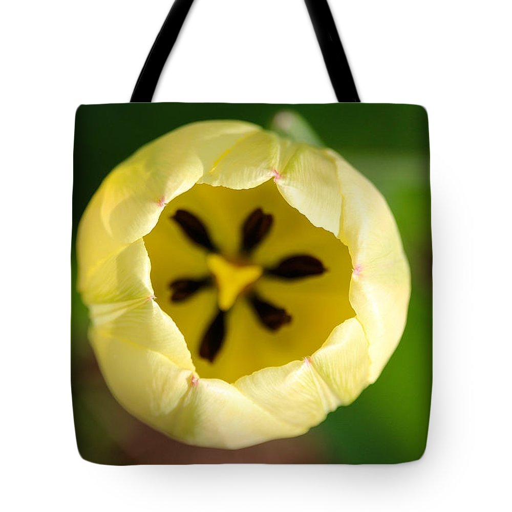 Flower Tote Bag featuring the photograph Early Opener by Susan Herber