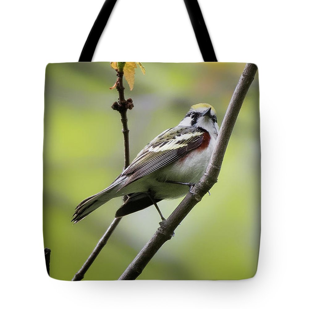 Chestnut Sided Warbler Tote Bag featuring the photograph Chestnut Sided Warbler 2 by Bill Wakeley
