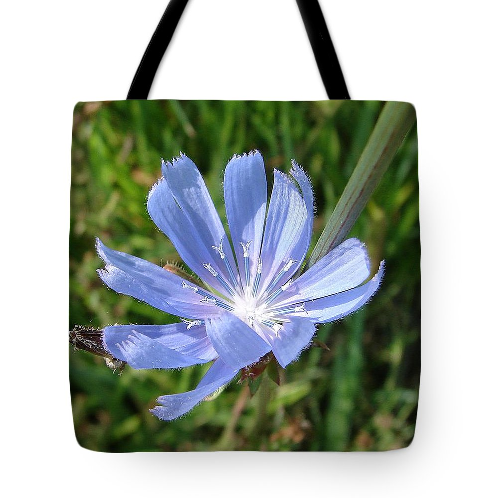 Blue Flower Green Tote Bag featuring the photograph Chicory by Luciana Seymour