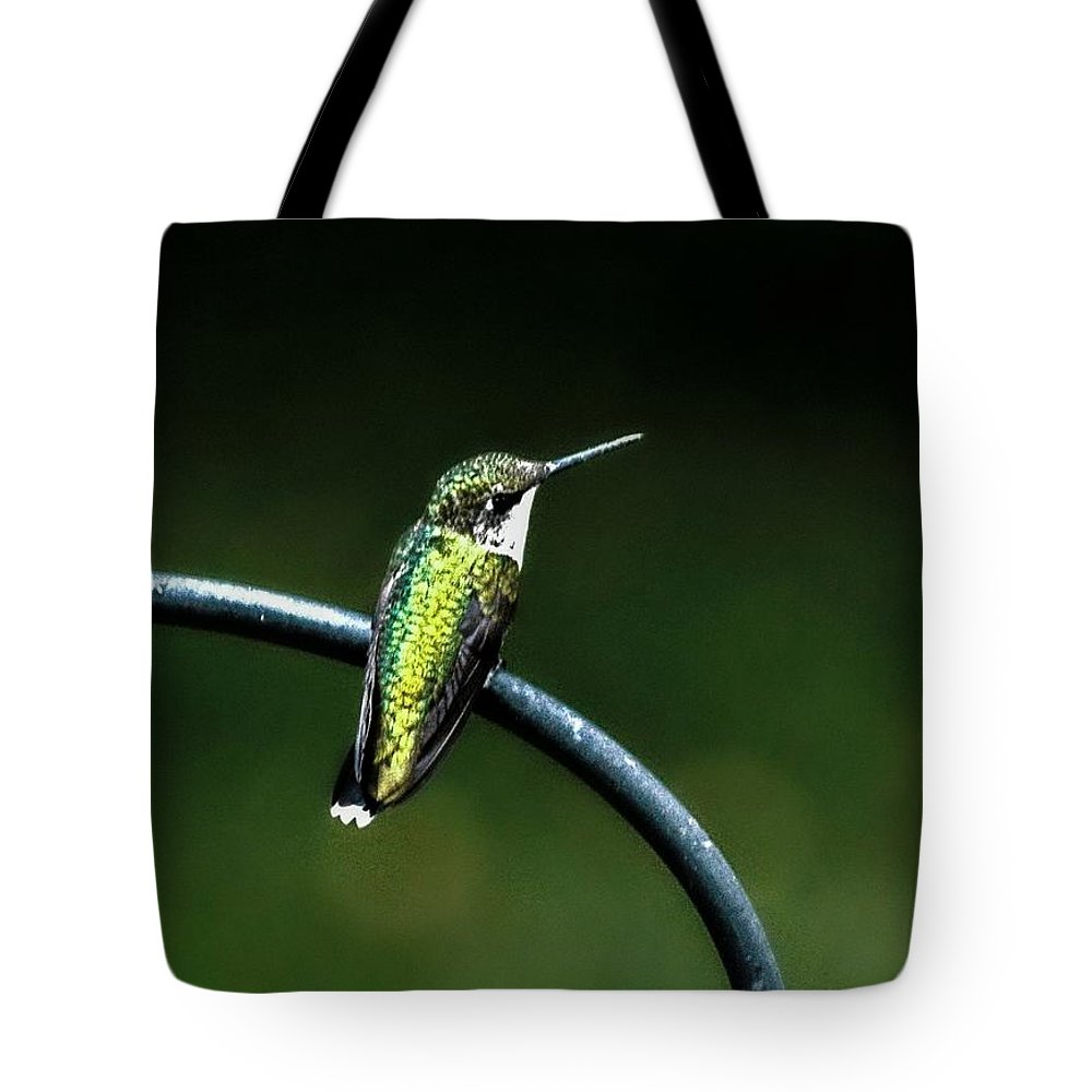 Hummingbird Tote Bag featuring the photograph Chillaxin by Catherine Melvin