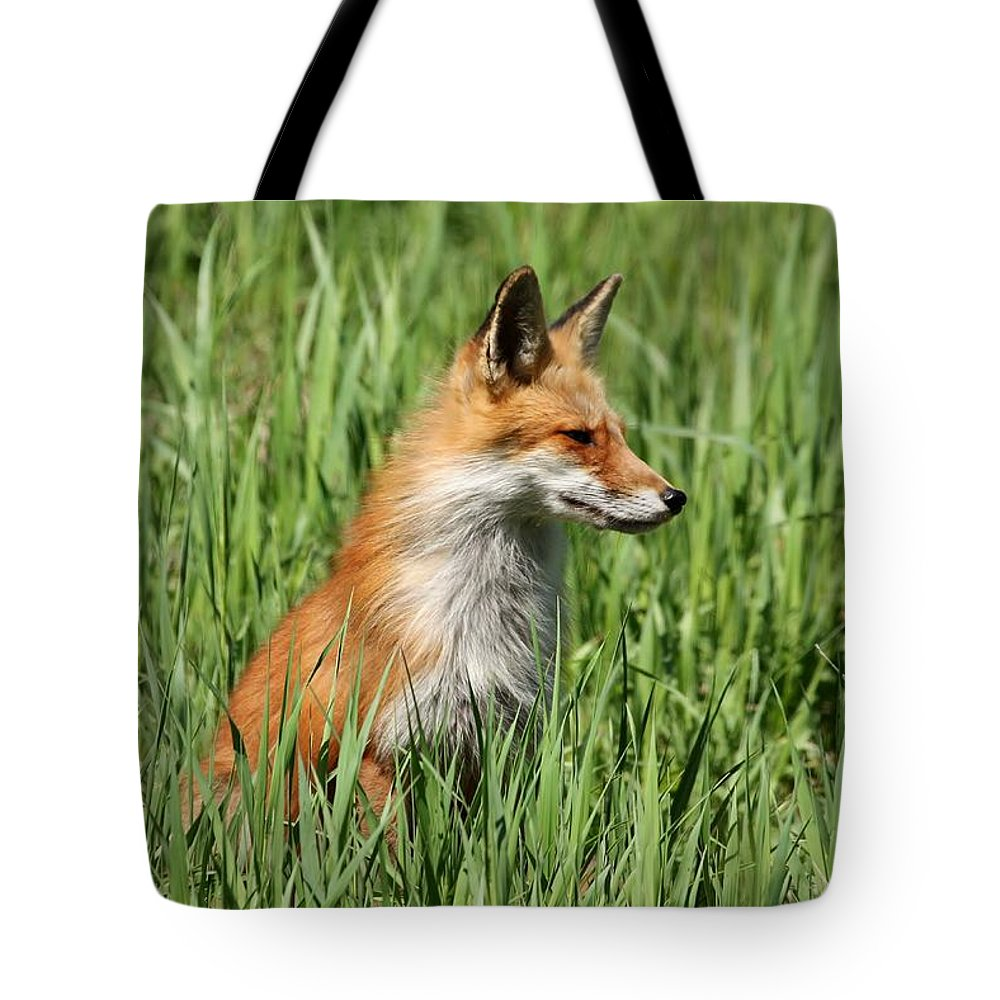 Vixen Tote Bag featuring the photograph Chillin Vixen by Teresa McGill