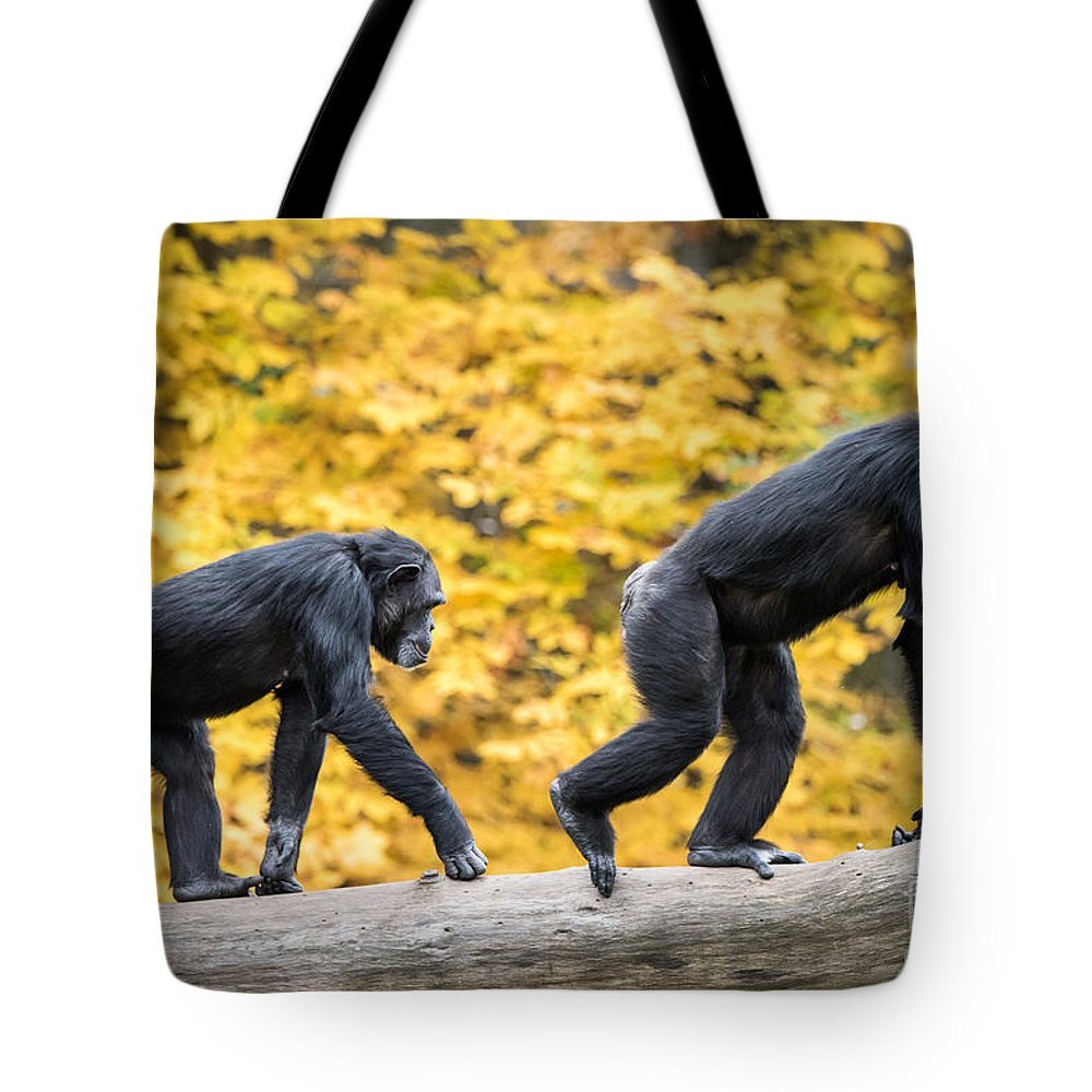 Animal Tote Bag featuring the photograph Chimpanzee Pair IIi by Abeselom Zerit
