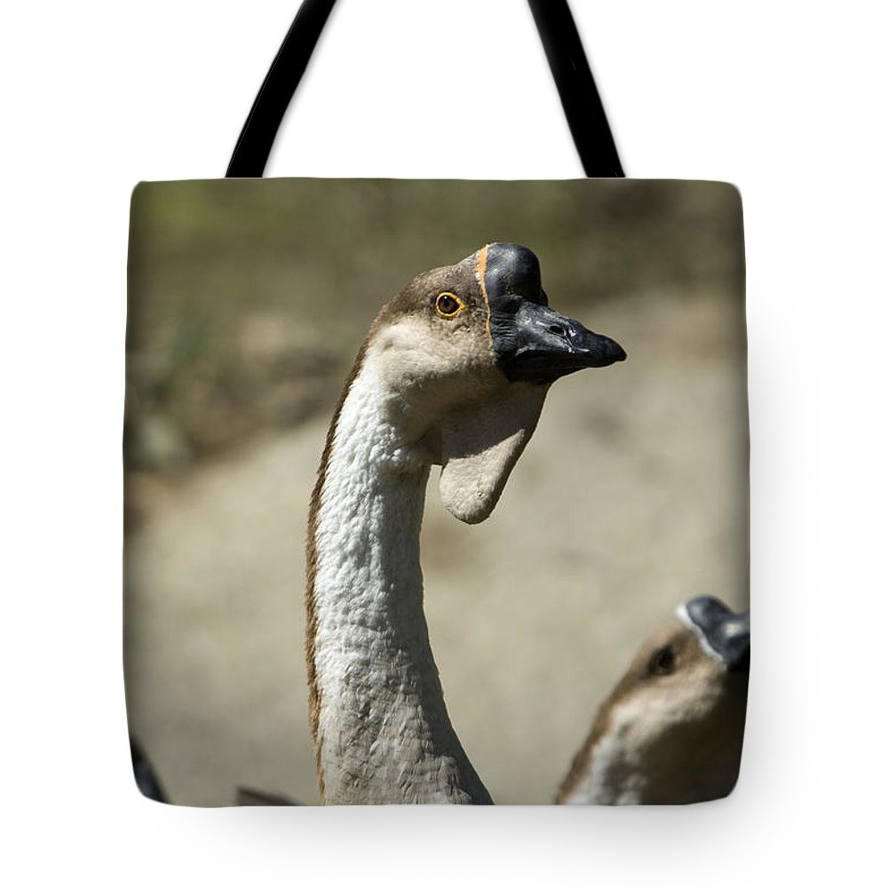 Photography Tote Bag featuring the photograph Chinese Geese Anser Cygnoides At Zoo by Joel Sartore