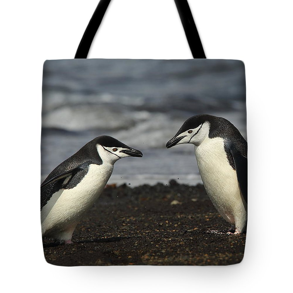 Penguin Tote Bag featuring the photograph Chinstrap Penguin Duo by Bruce J Robinson