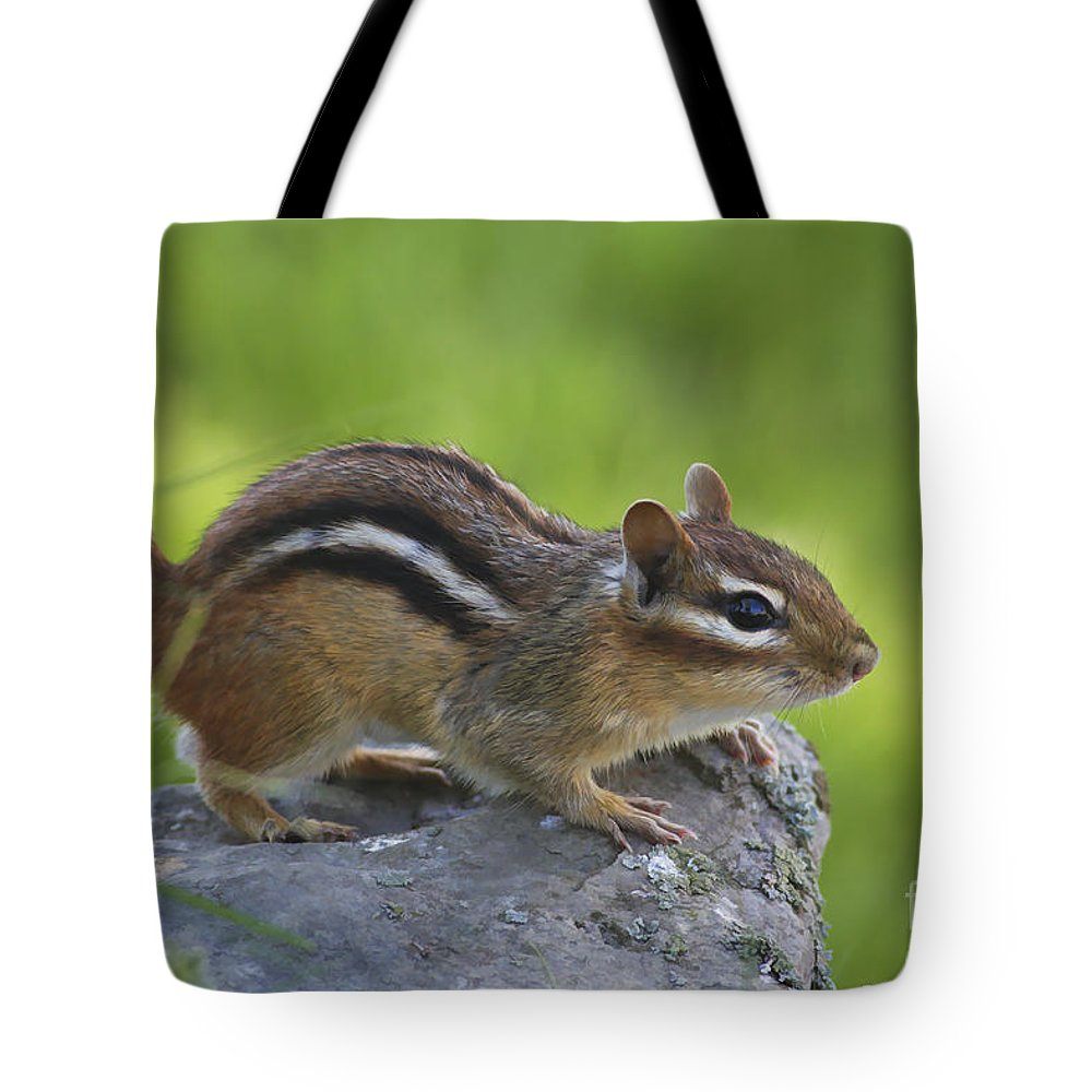 Nature Tote Bag featuring the photograph Chippy On The Move by Deborah Benoit