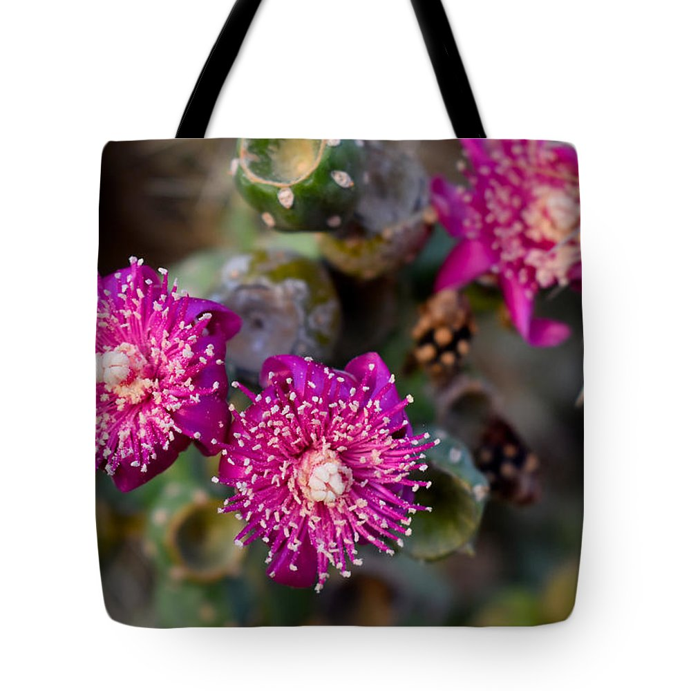 Cholla Tote Bag featuring the photograph Cholla 3 by Melisa Elliott