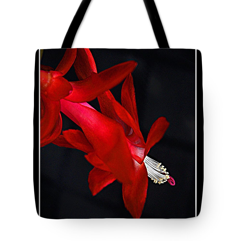 Bradley Tote Bag featuring the photograph Christmas Flower by Rich Despins
