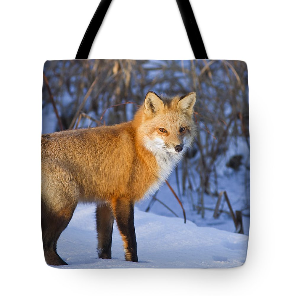 Animal Tote Bag featuring the photograph Christmas Fox by Mircea Costina Photography