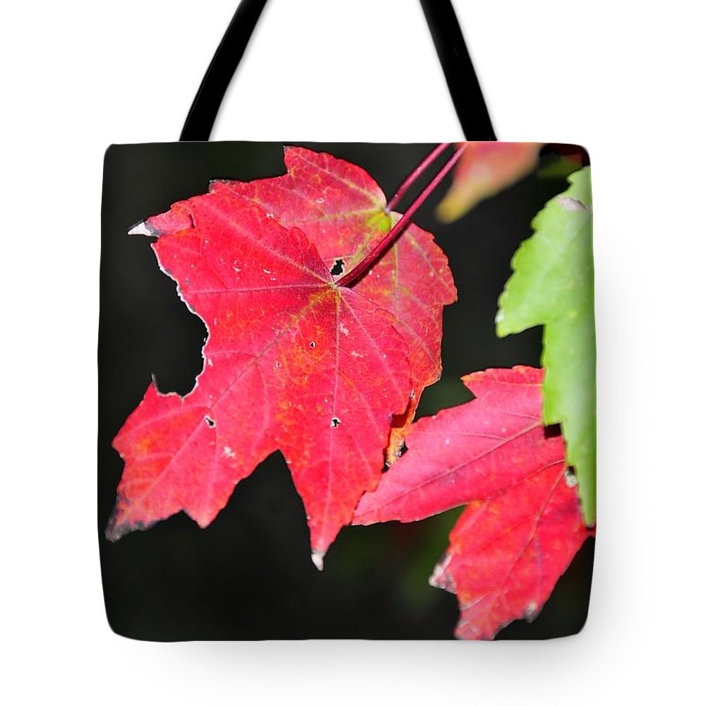 Leafs Tote Bag featuring the photograph Christmas Leafs by David Lee Thompson