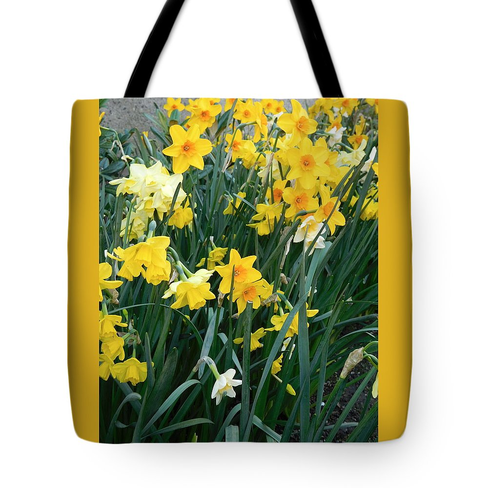 Scene Tote Bag featuring the photograph Circle Of Daffodils by Maro Kentros