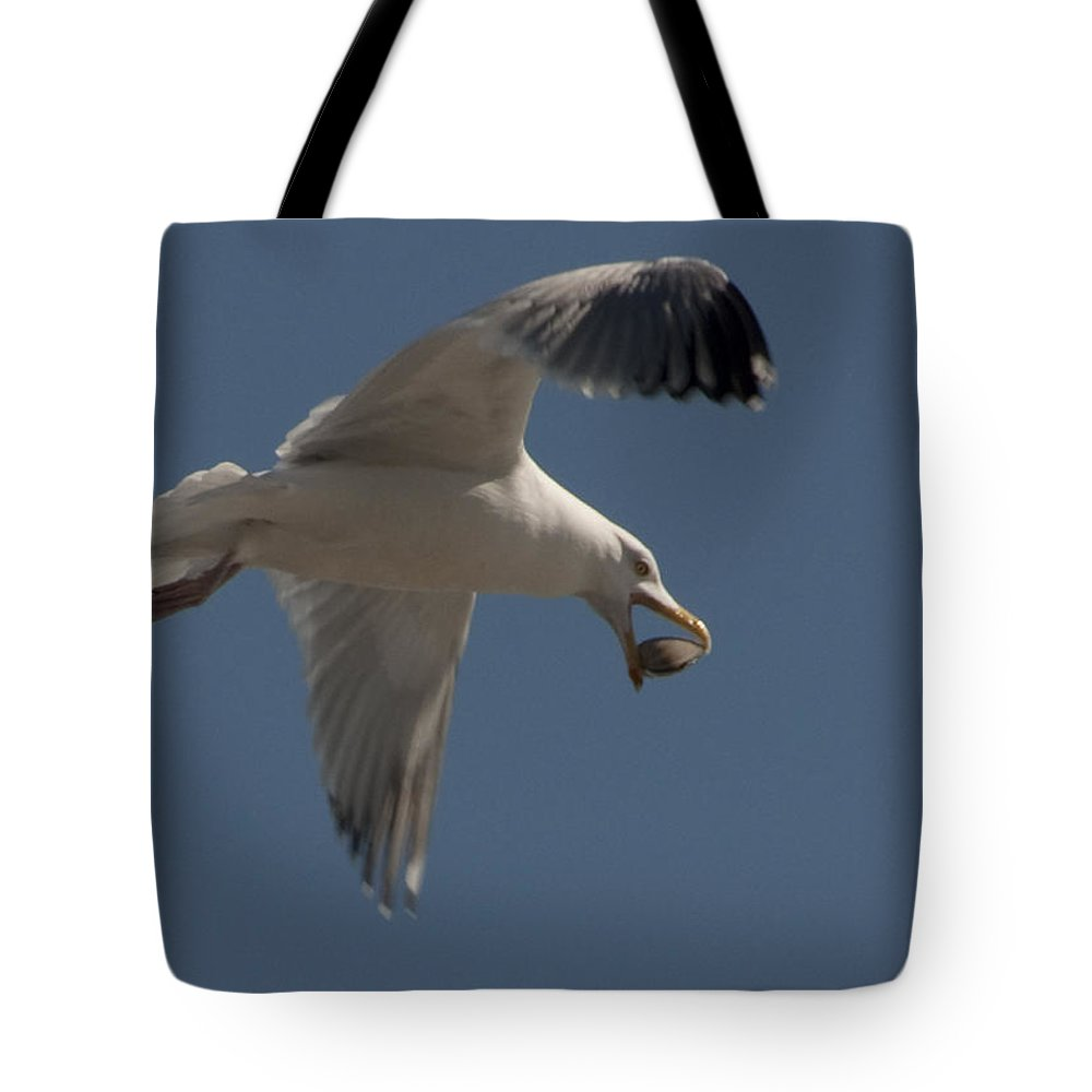 Seagull Tote Bag featuring the photograph Clams For Dinner by Steven Natanson